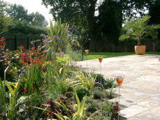 architectural planting with herbaceous perrenials